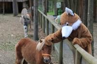 Ponyworkshop Walderlebniswelt